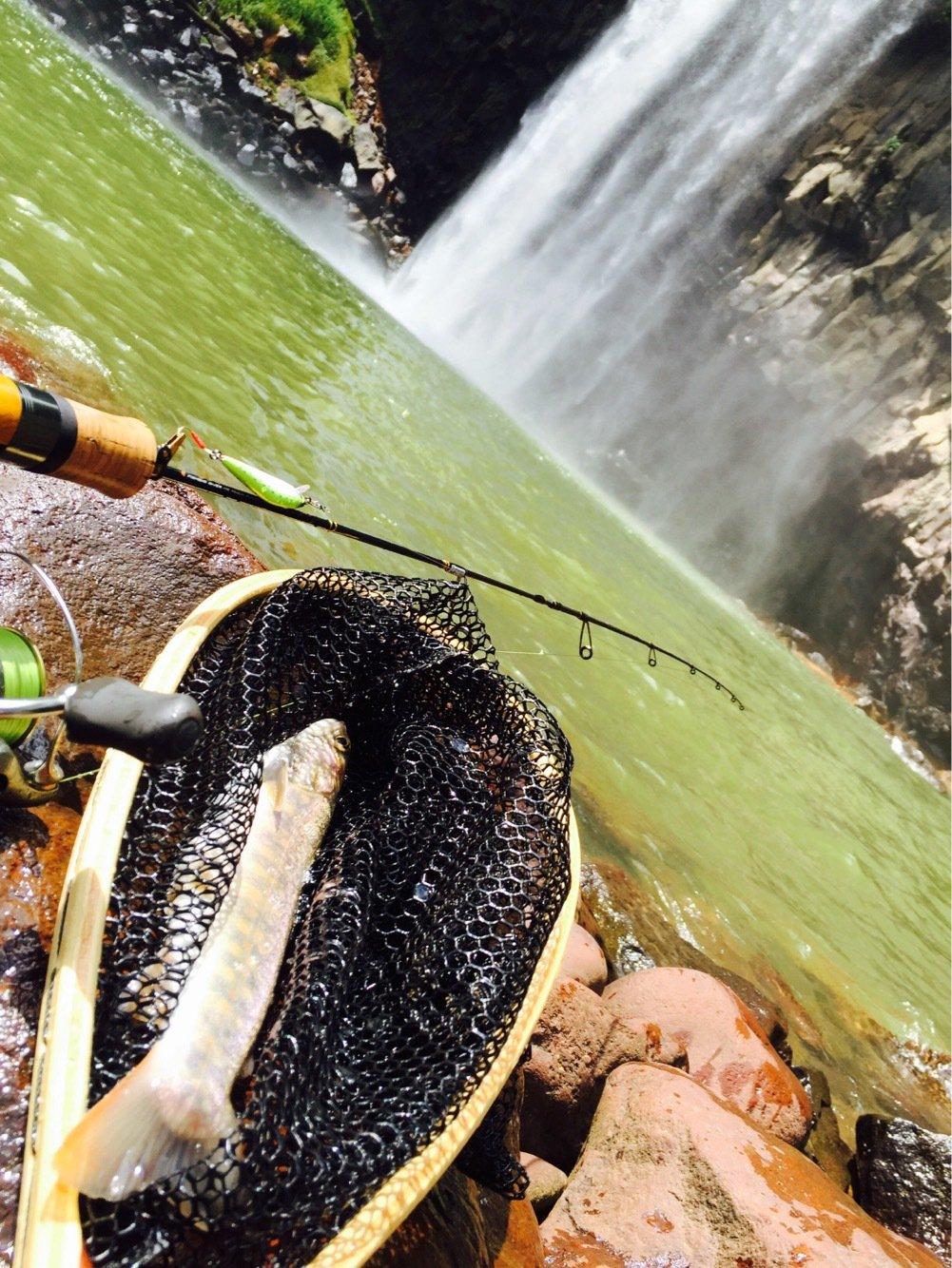 nob3Sさんの投稿画像,写っている魚はイワナ