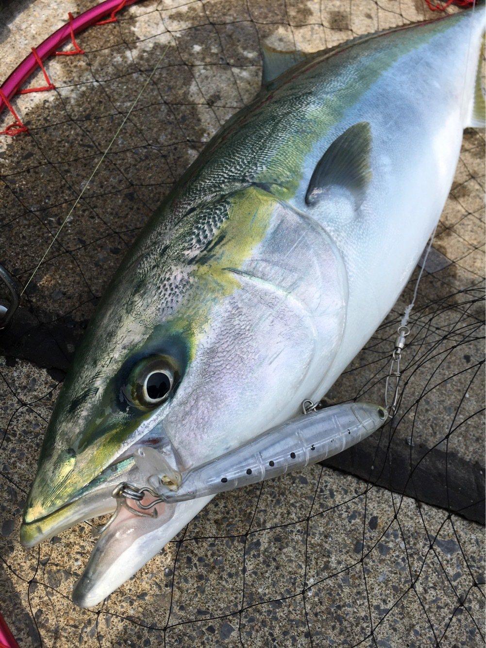 長次郎さんの投稿画像,写っている魚はブリ