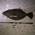阪本さんさんの北海道岩内郡でのヒラメの釣果写真