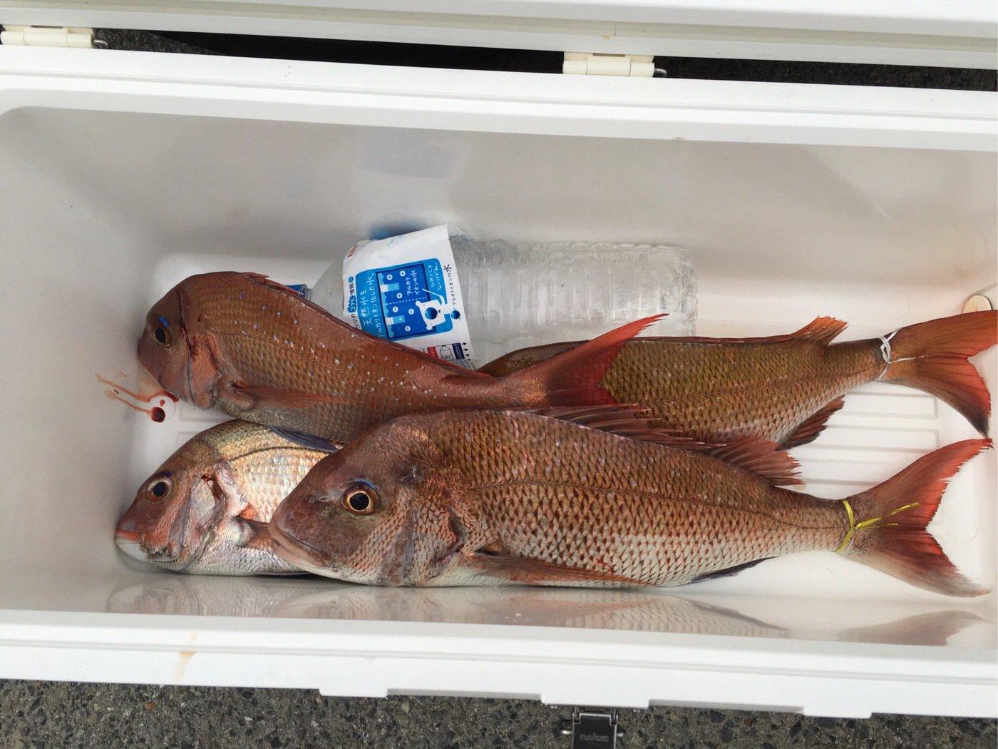 TKOさんの投稿画像,写っている魚はマダイ