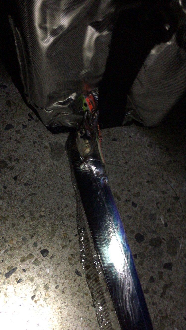 HIDEさんの投稿画像,写っている魚はタチウオ