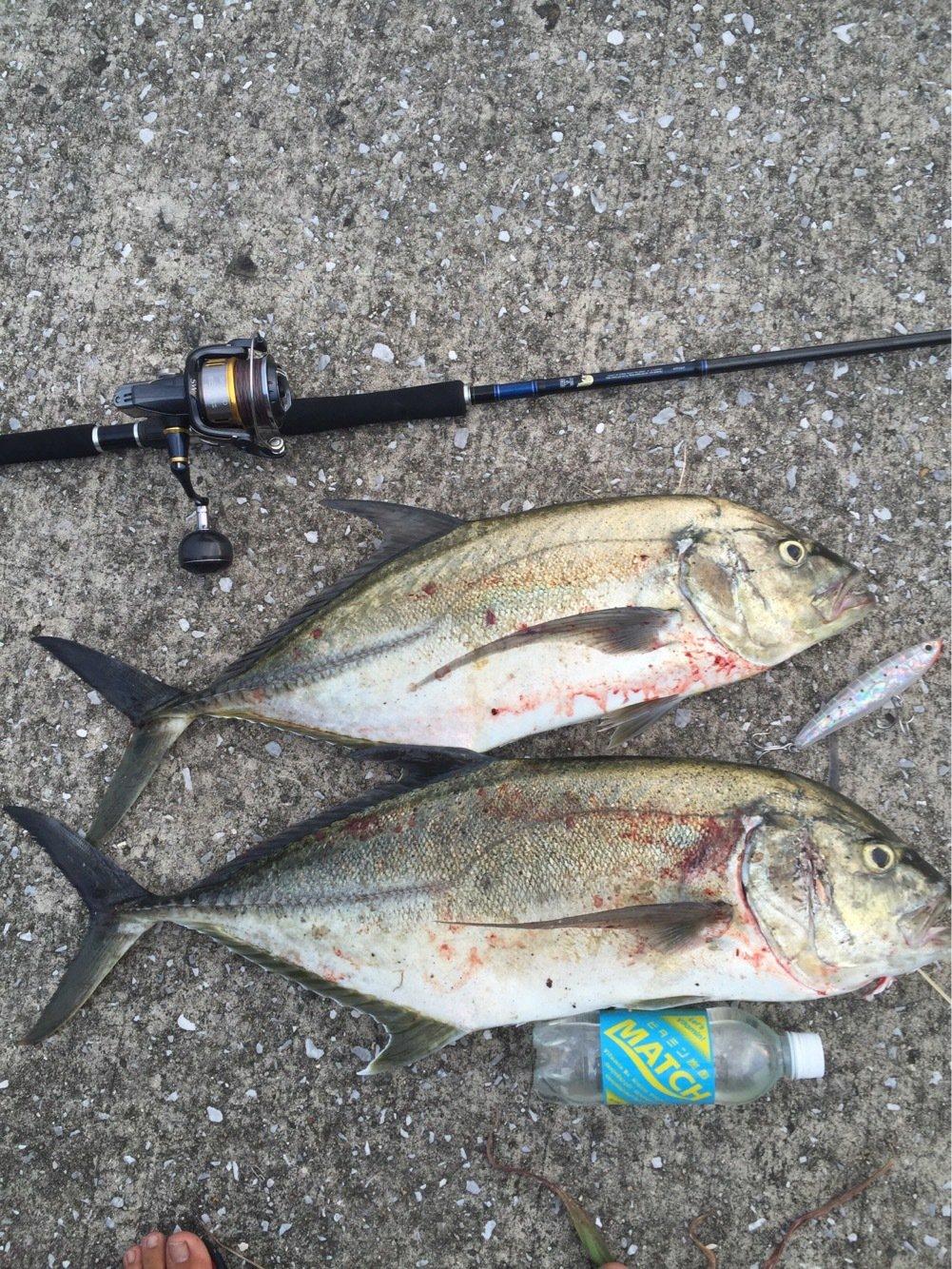 ヨウスケさんの投稿画像,写っている魚はオニヒラアジ