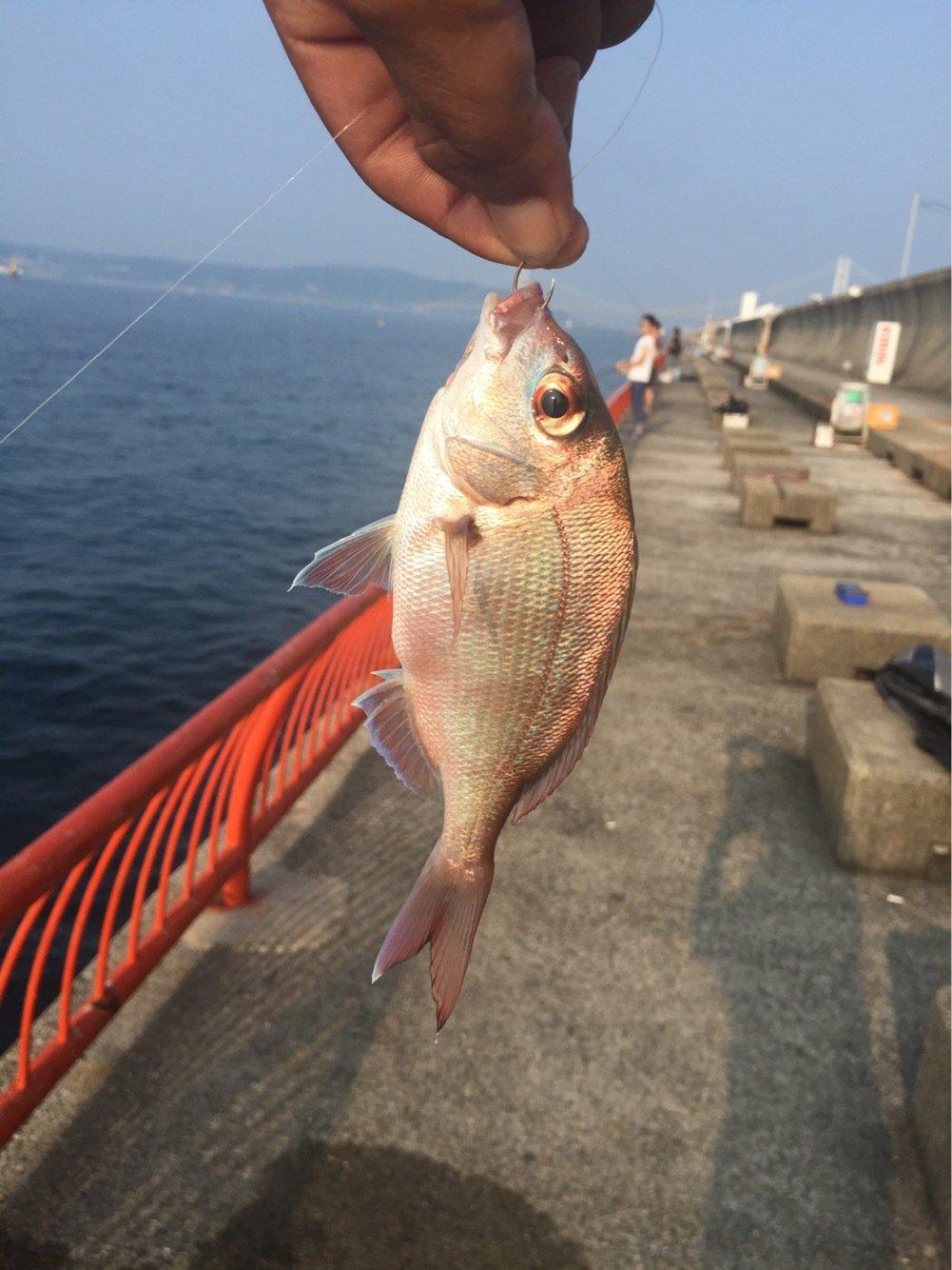 sangmoonさんの投稿画像,写っている魚はマダイ