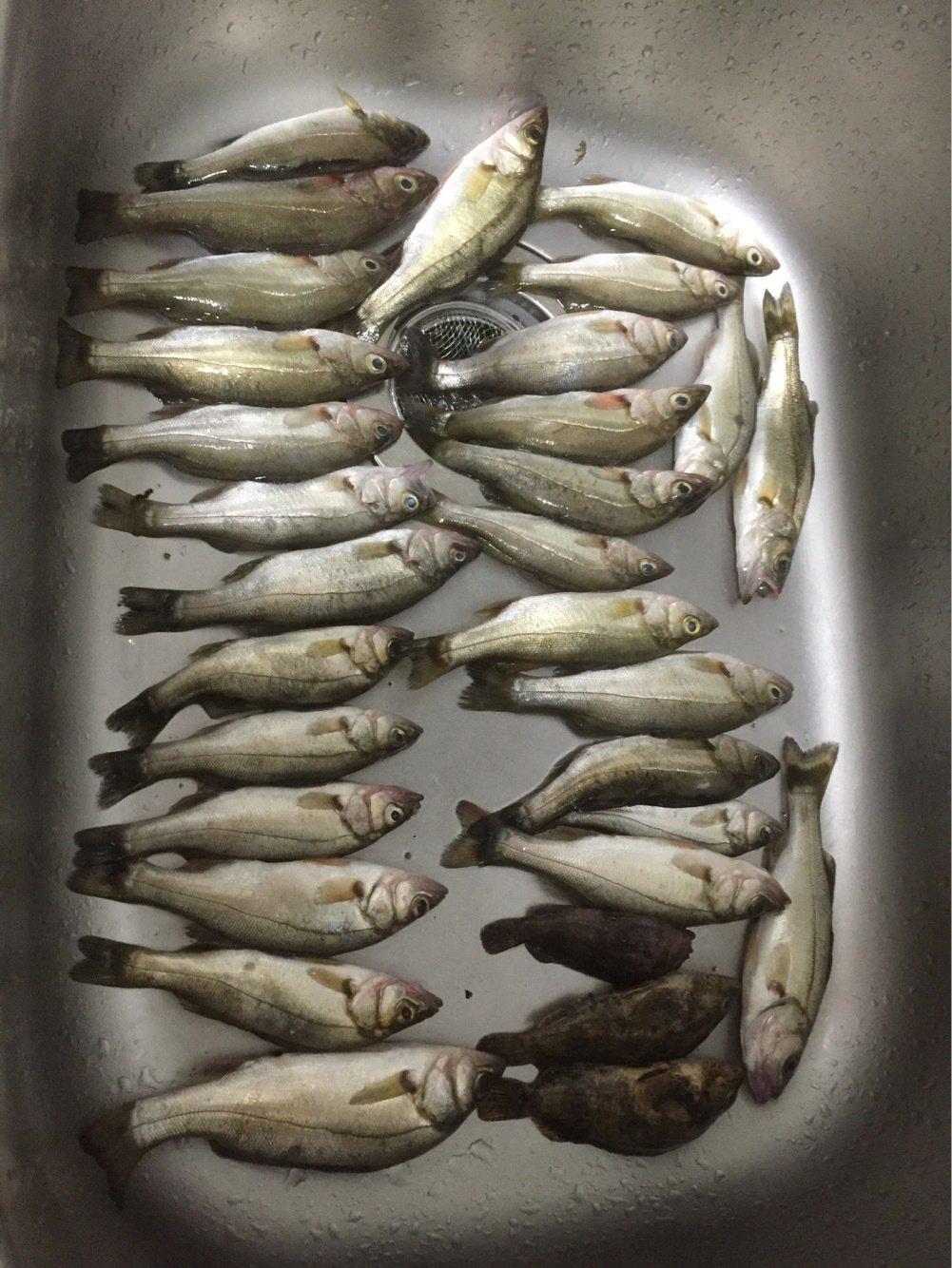もっしぃさんの投稿画像,写っている魚は