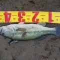 たろいもさんの鹿児島県鹿屋市での釣果写真