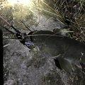 ドドレファンさんの大分県日田市での釣果写真