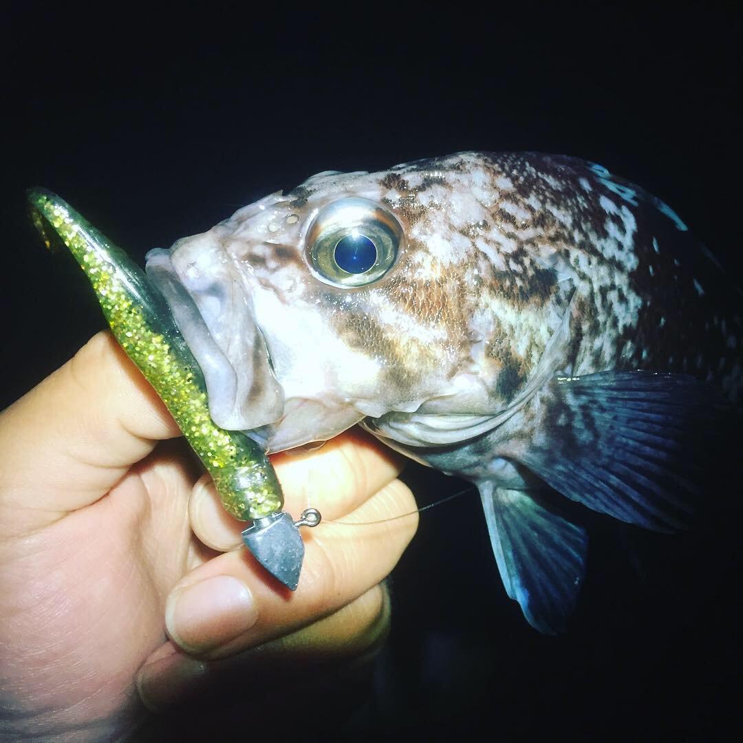 tatsukiさんの投稿画像,写っている魚はキツネメバル