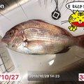 慧サマさんの東京都渋谷区での釣果写真