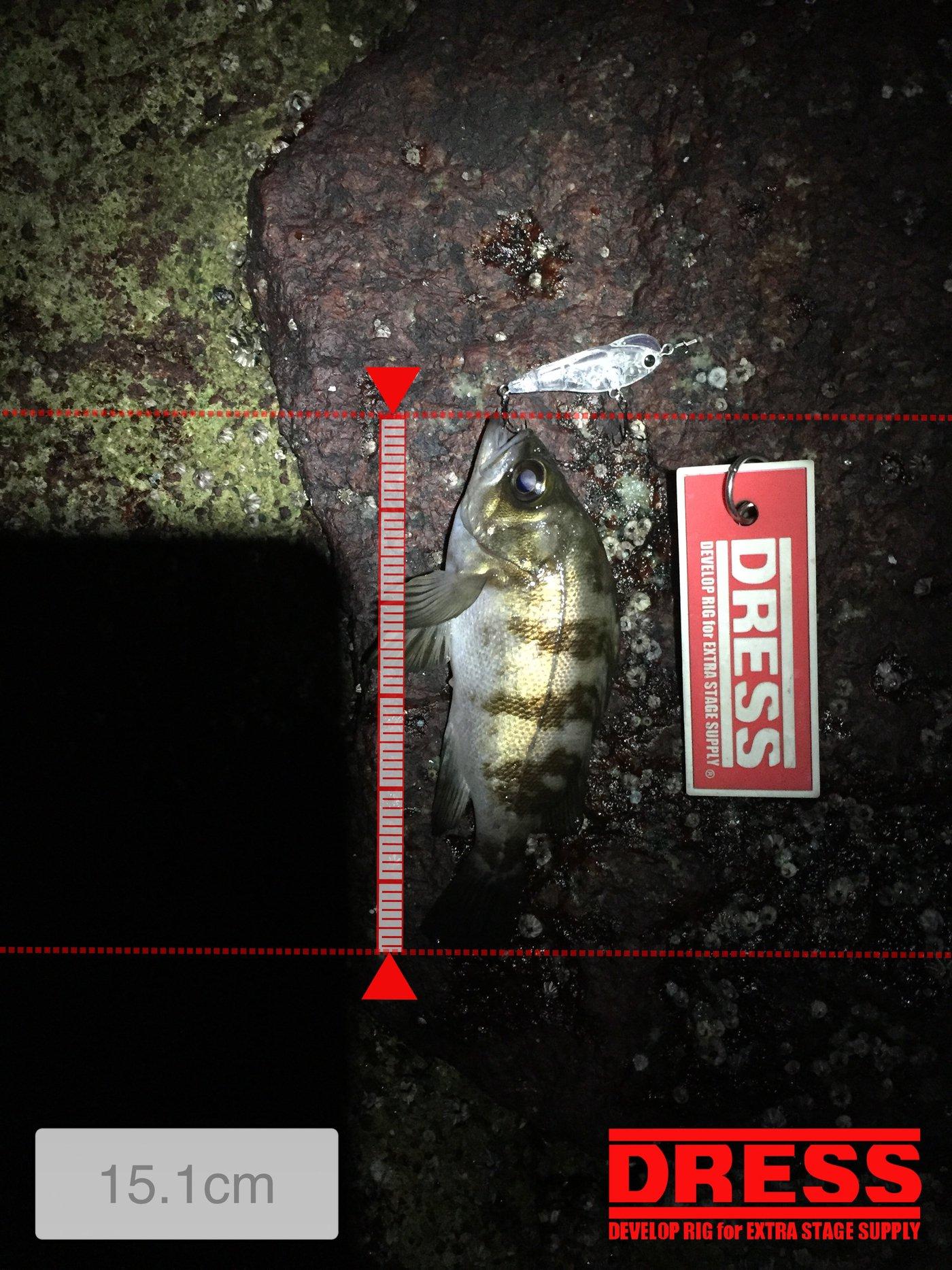 ノリさんさんの投稿画像,写っている魚はメバル,