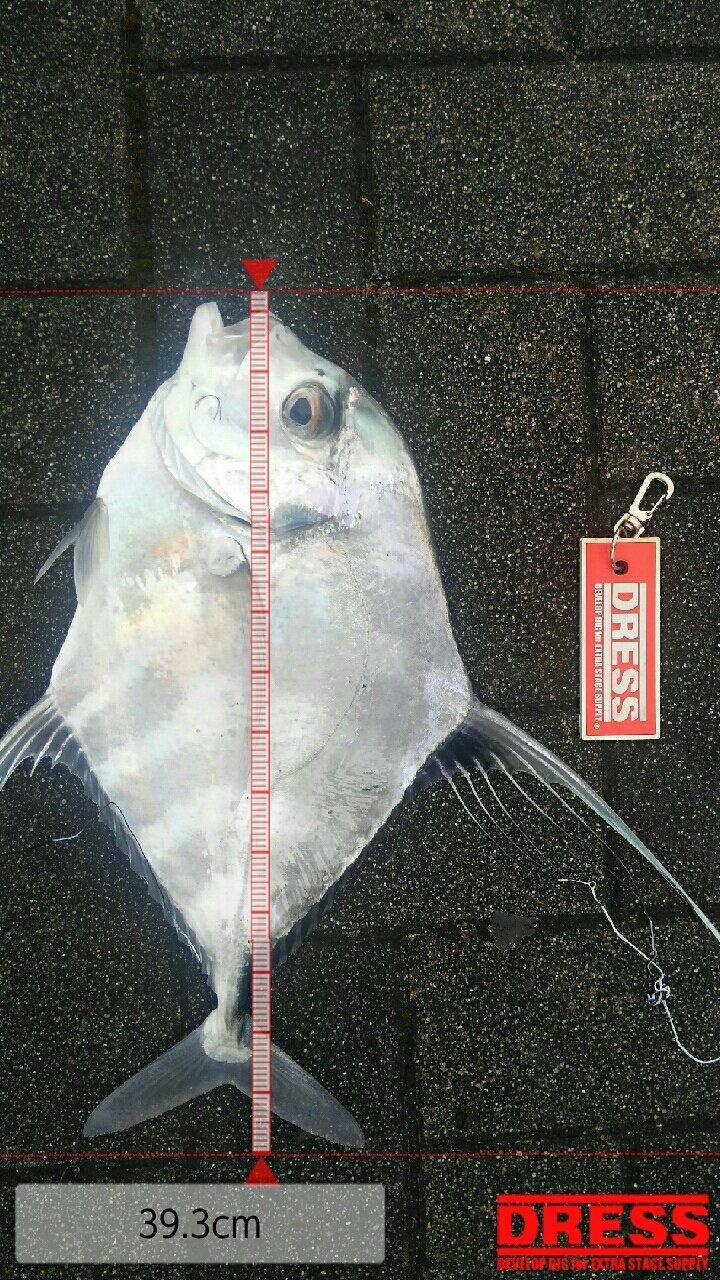 mrfjさんの投稿画像,写っている魚はイトヒキアジ