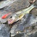 あくんさんの兵庫県宍粟市での釣果写真