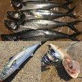 まなみんさんの佐賀県佐賀市での釣果写真