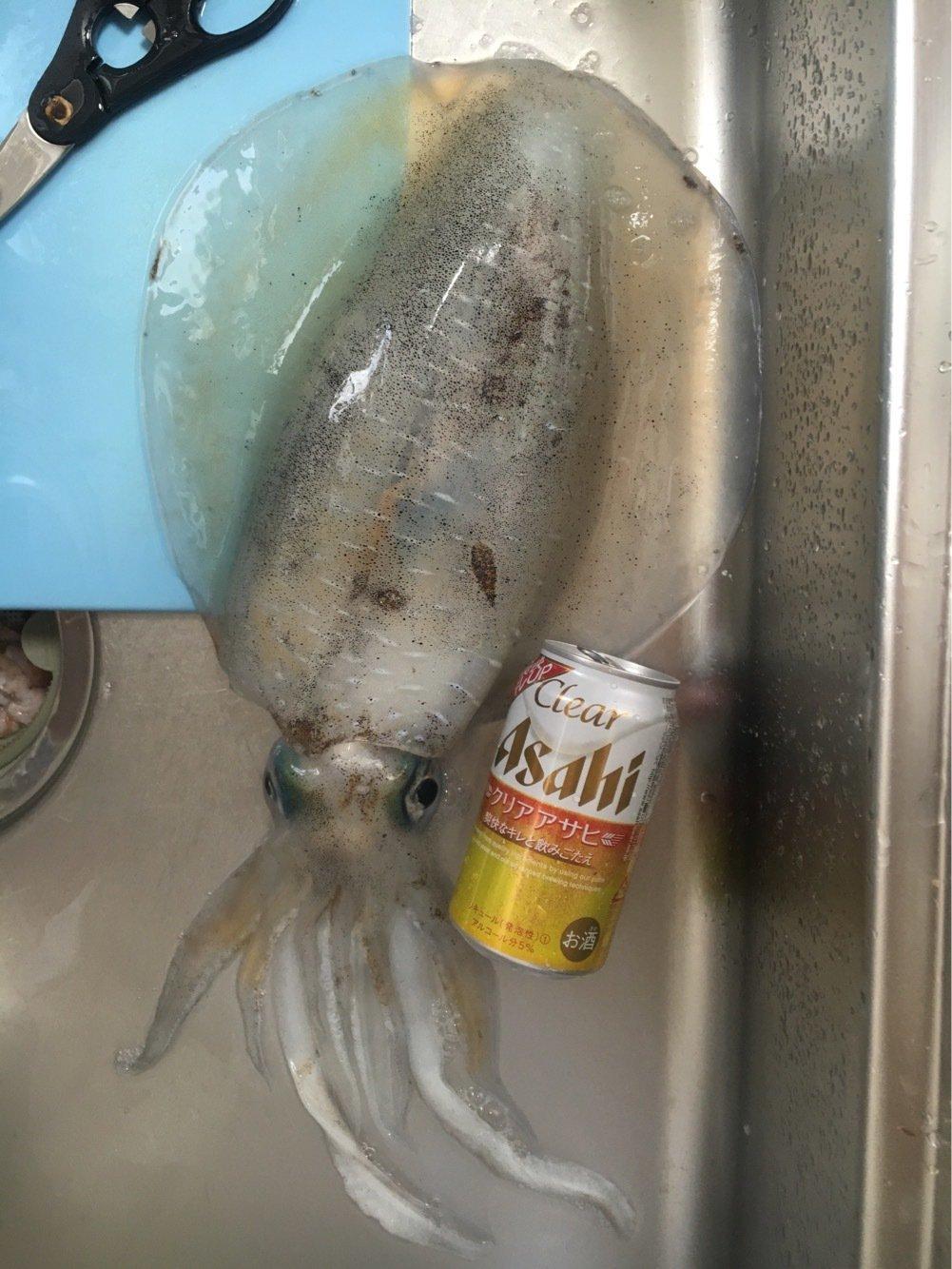 けんたろうまるさんの投稿画像,写っている魚はアオリイカ