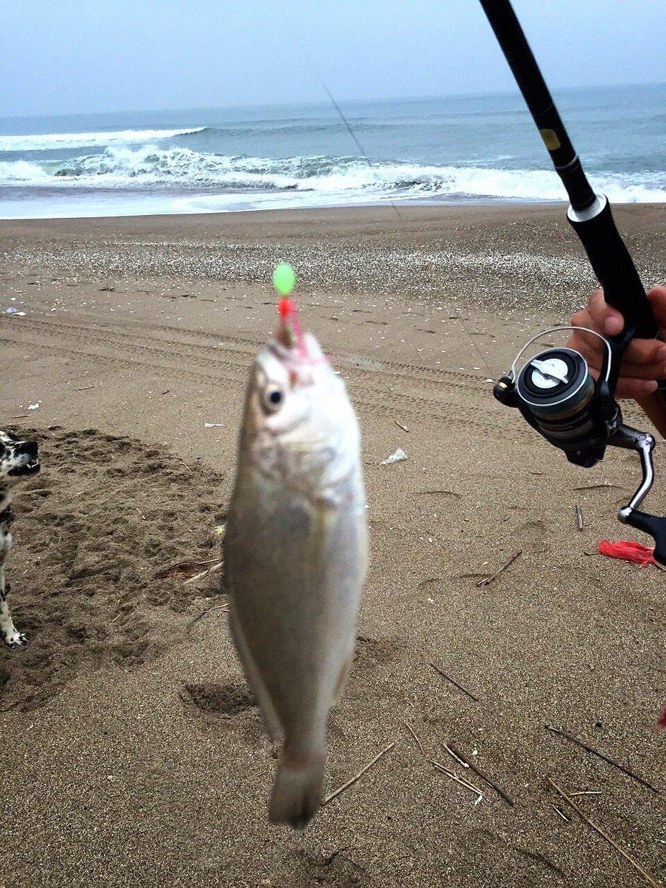 ひろひさんの投稿画像,写っている魚はイシモチ