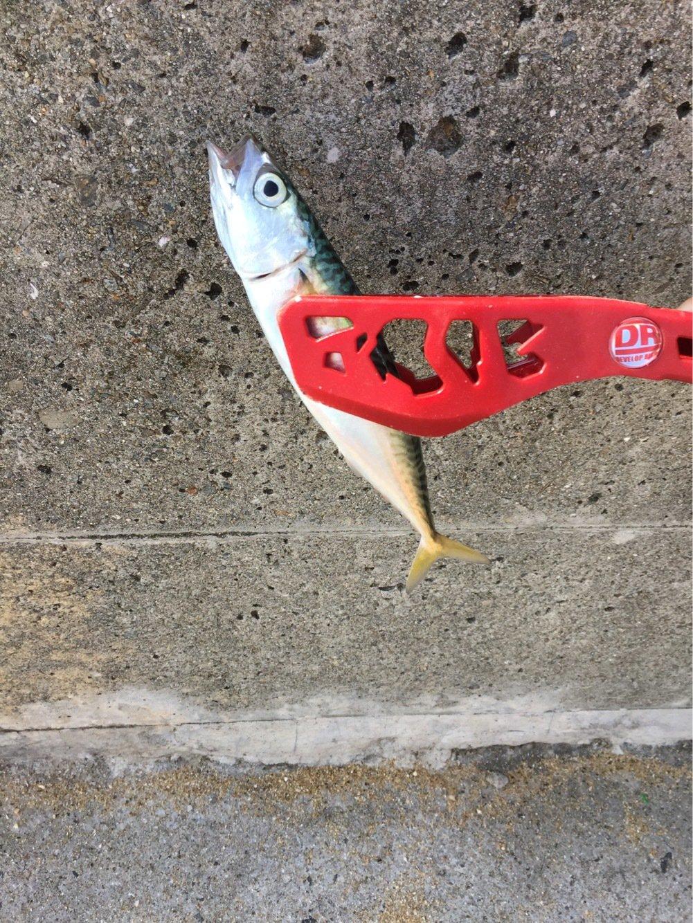 ニックさんの投稿画像,写っている魚は