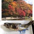 金(きん)さんの栃木県塩谷郡での釣果写真