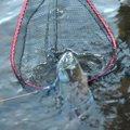 🦍さんの北海道網走郡での釣果写真