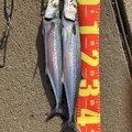 生徒さんさんの青森県北津軽郡での釣果写真