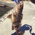 Kazuya さんの岡山県備前市での釣果写真