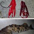 ONさんの宮城県亘理郡でのアイナメの釣果写真