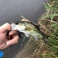 飯島   直道さんの茨城県潮来市での釣果写真