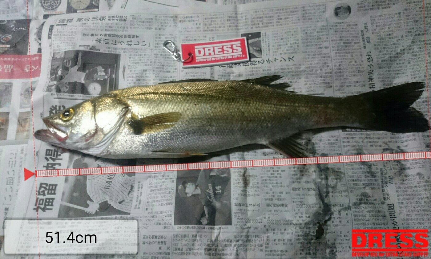 ぎっくりさんの投稿画像,写っている魚はスズキ