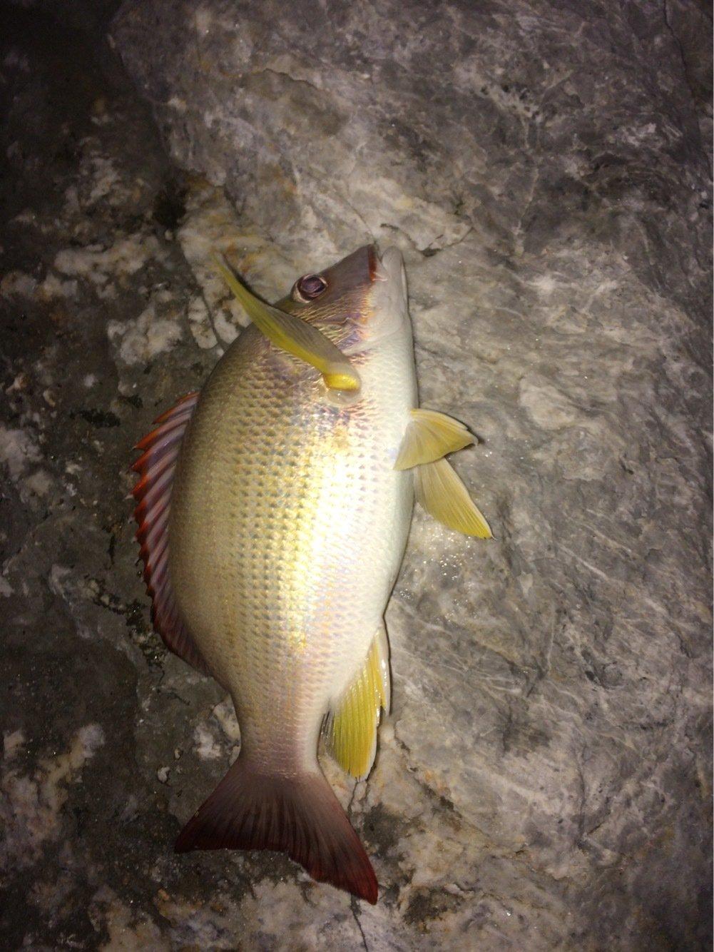 八咫烏さんの投稿画像,写っている魚は
