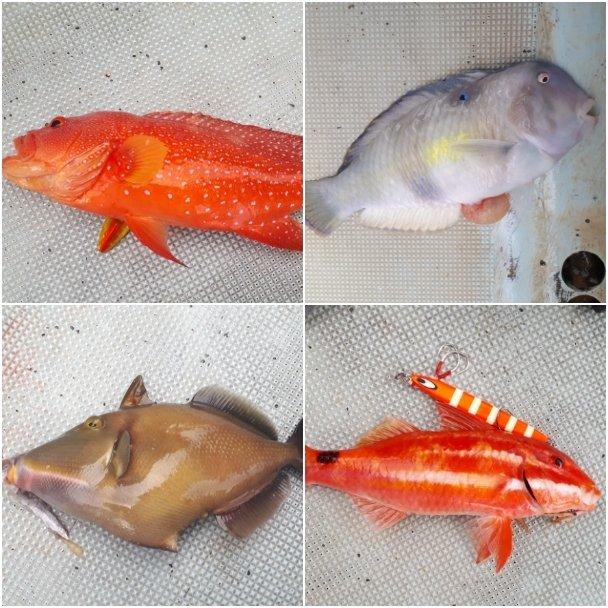ふかさんの投稿画像,写っている魚はメガネウマヅラハギ,テンス,バラハタ,アマミフエフキ,イトフエフキ