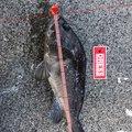 619さんの北海道増毛郡での釣果写真