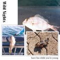 えびちゃん❗️さんの兵庫県でのキュウセンの釣果写真