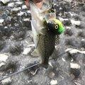 yhoさんの大分県国東市での釣果写真
