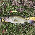 釣りに行こう!〜メシア〜さんの鹿児島県姶良市での釣果写真