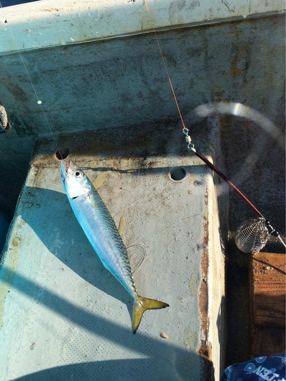 みつをさんの投稿画像,写っている魚は
