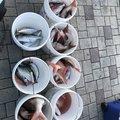 yaaamanさんのイシガレイの釣果写真