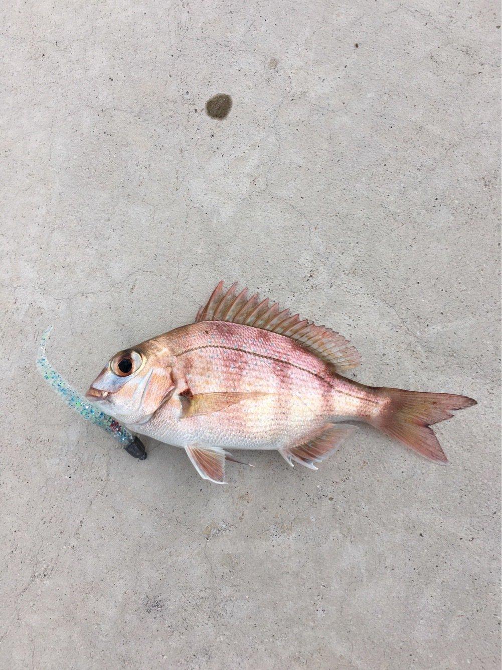 to atopさんの投稿画像,写っている魚は