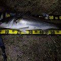 タコいってんさんさんの石川県白山市での釣果写真