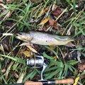 かずさんの北海道河東郡での釣果写真