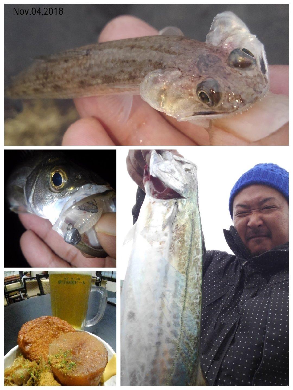 KRO さんの投稿画像,写っている魚はスズキ,サワラ,エソ