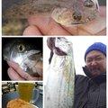 KRO さんの静岡県静岡市でのスズキの釣果写真