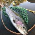 りーさんさんの群馬県渋川市での釣果写真