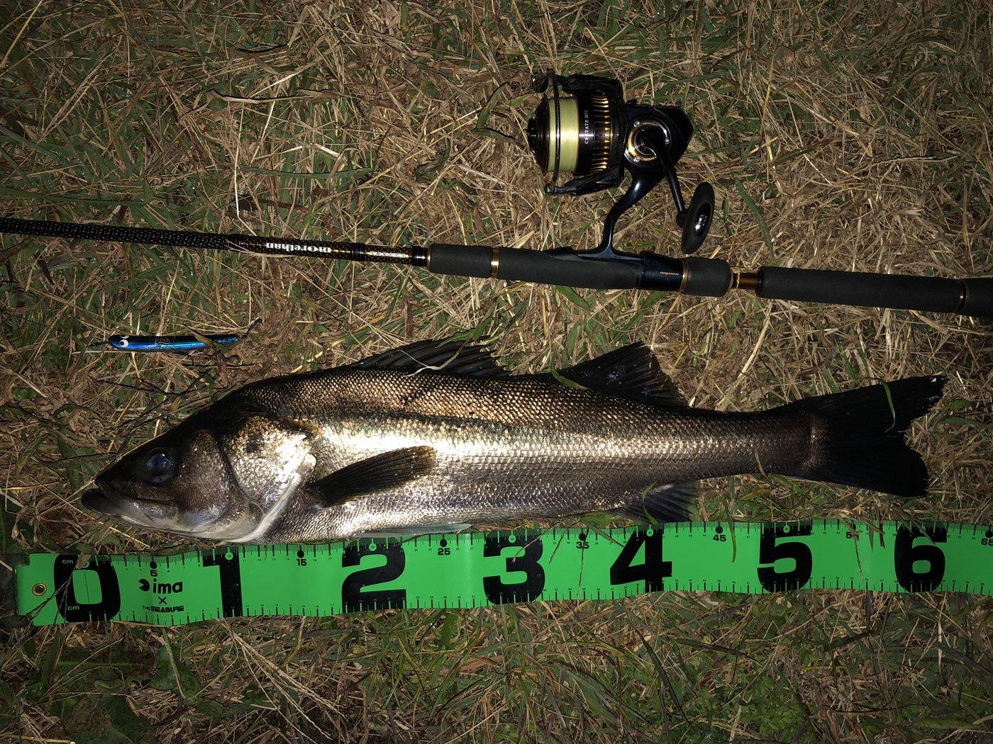 H.Mさんの投稿画像,写っている魚はスズキ