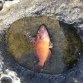 NOBUさんの山口県阿武郡での釣果写真