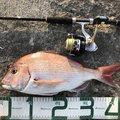 まさちんさんの秋田県潟上市での釣果写真