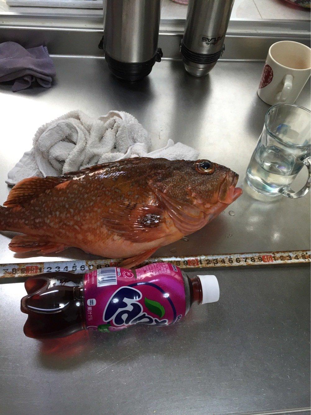 ビビさんの投稿画像,写っている魚はタチウオ