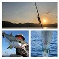 け〜たゴリラさんの鹿児島県南さつま市でのヒラマサの釣果写真