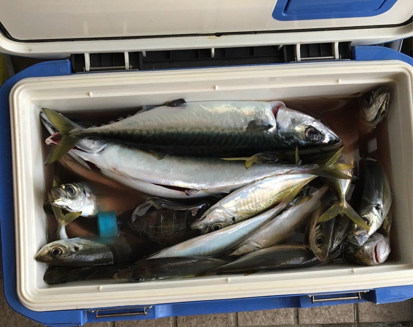 aoricyuさんの投稿画像,写っている魚は