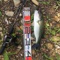 Rさんの和歌山県有田郡での釣果写真