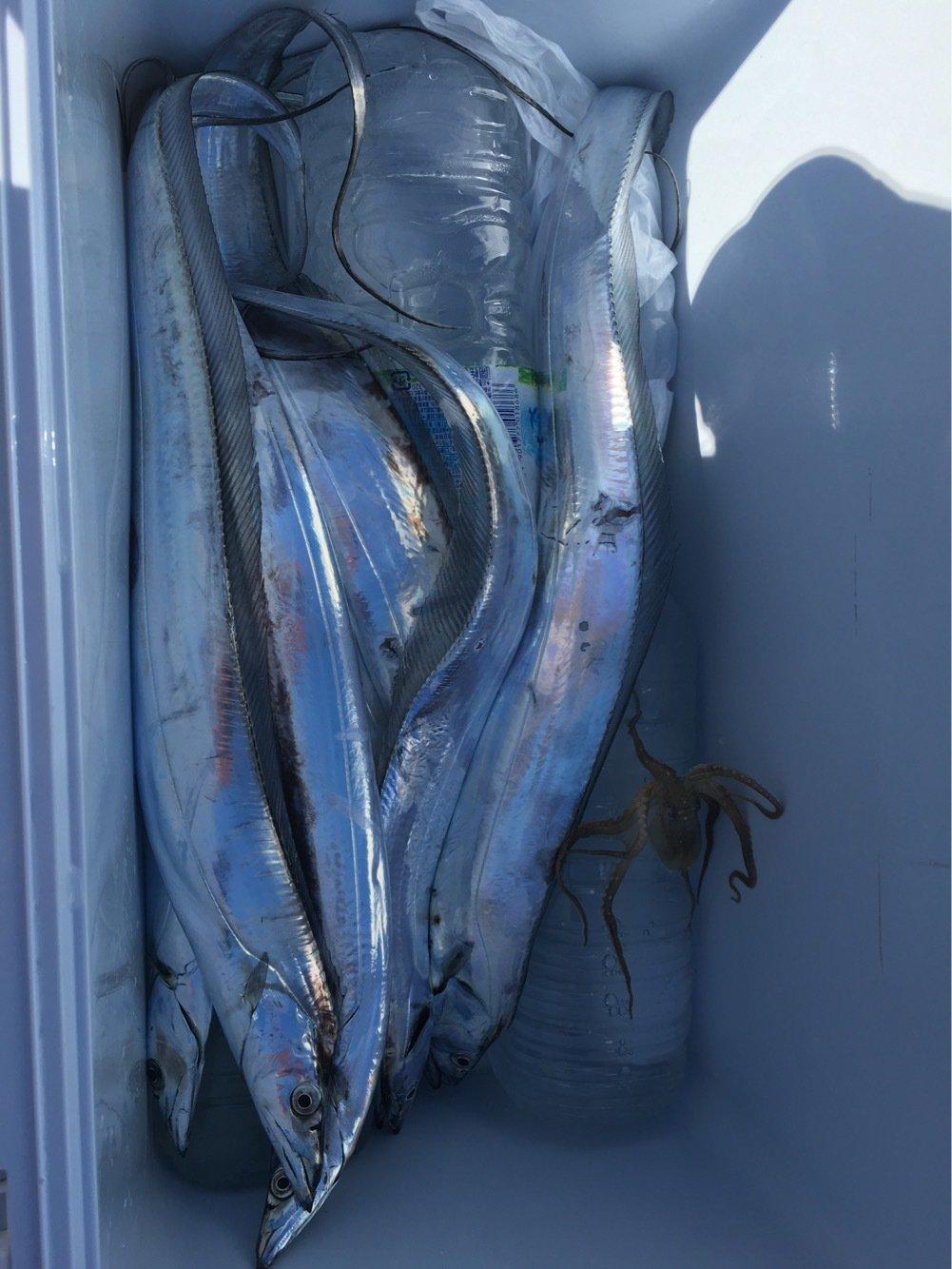 佐藤 勇登さんの投稿画像,写っている魚はタチウオ