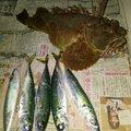 ノリさんの北海道小樽市での釣果写真