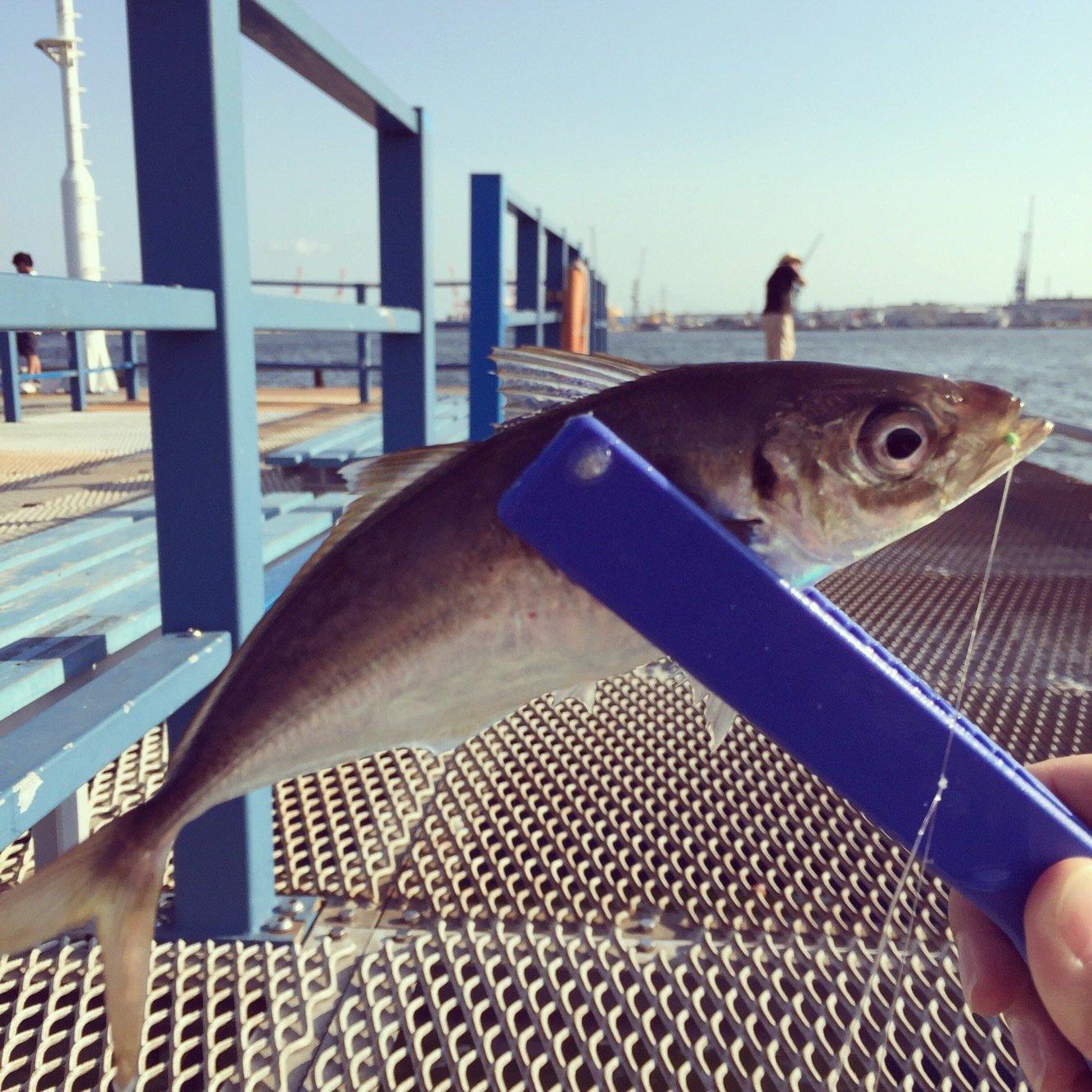まうさんの投稿画像,写っている魚はアジ